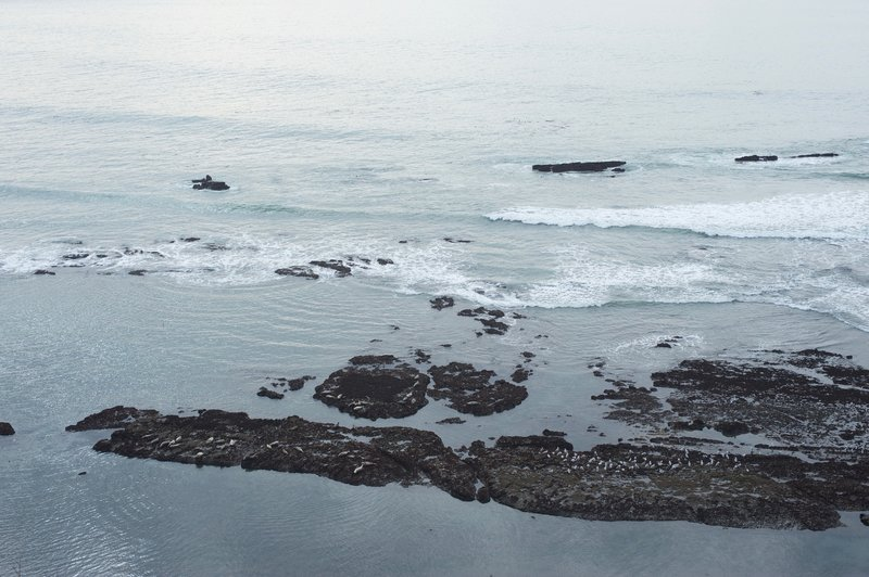 Elephant seals and birds rest on the rocks on the beach below the trail.
