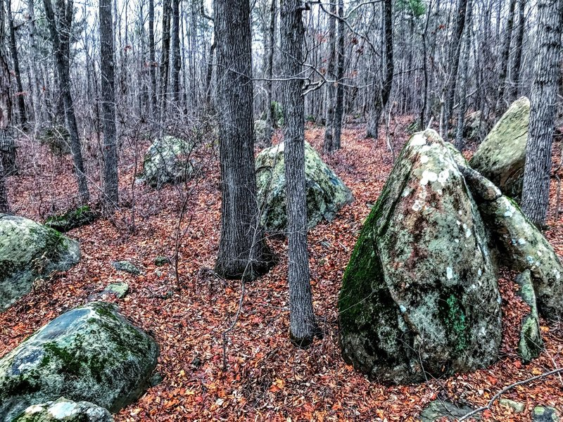 Half a billion year old Greenstone boulders