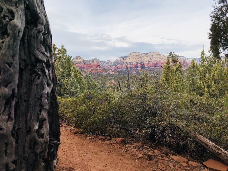 View from Devil's Bridge home- about 1.5 miles in.