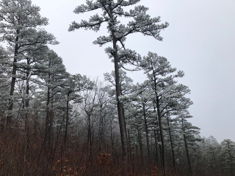 Trees frosted over near Hurricane Knob