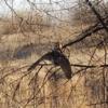 Barn owl sighting on Wolverine Loop