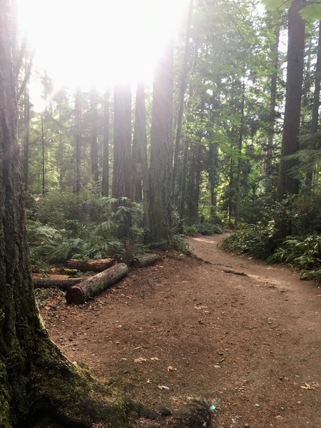 The dirt trail leading to Meadowdale Beach