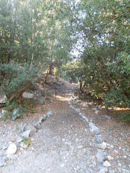 Half Knob Trail is mostly under oak and pine canopy.