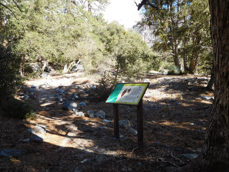 Interpretive signs on Golden Cup Nature Trail