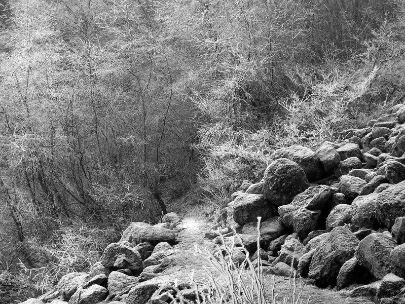 Winter on the Wyeth Trail