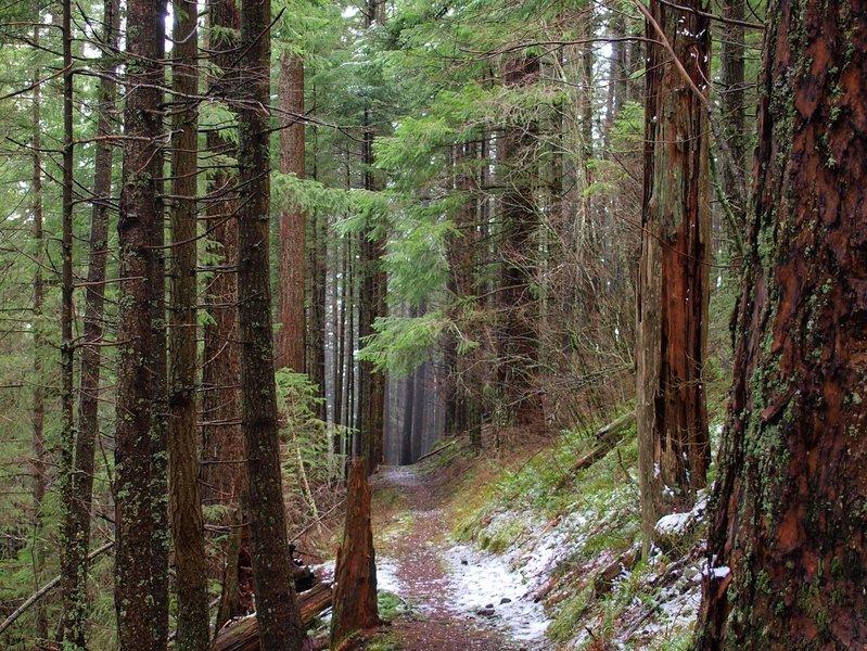 Along the Ridge Cutoff Trail
