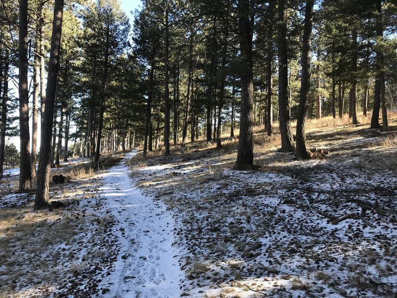 Genesee Mountain Trail turns back into singletrack after passing the bison preserve.