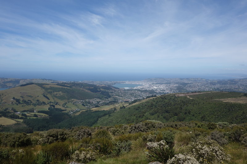 Dunedin viewed from the top of Mount Cargill