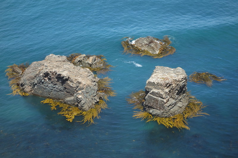 Three seaweed-skirted rocks below Nugget Point Lighthouse