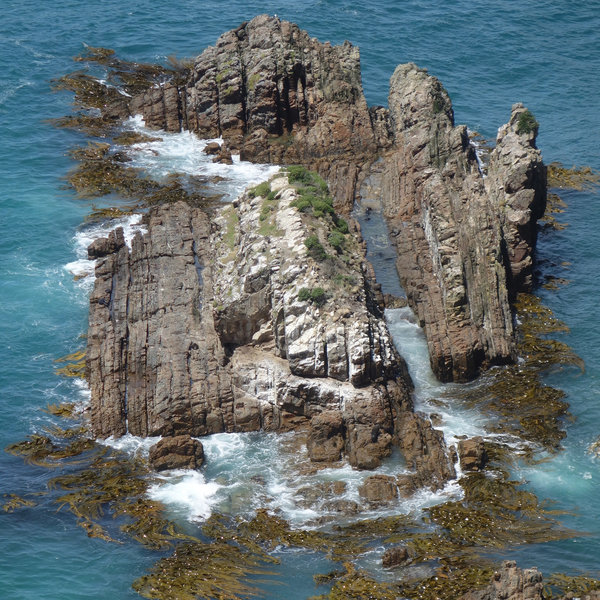 Seals play in the rocky channels below Nugget Point Lighthouse