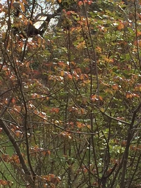 Poison Oak has leafed out from the warm days past—pretty to see but not to suffer from.