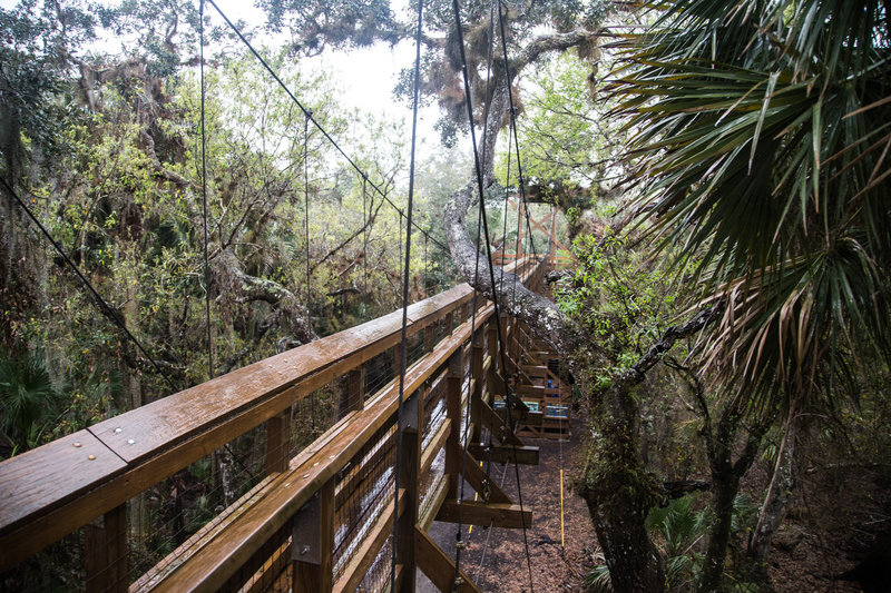 A walk among the canopy at Myakka River State Park