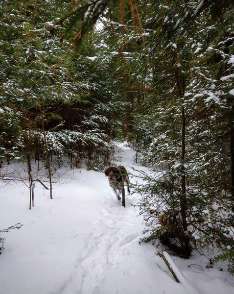 Great section of smaller snow covered pines on one of the awesome fast downhill sections.