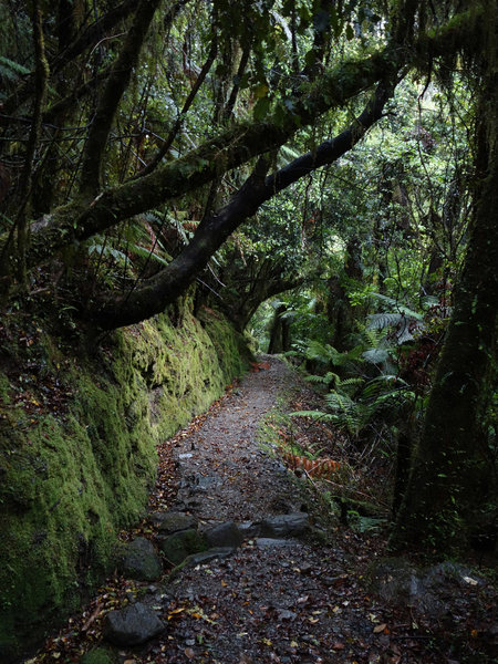 Most of the Callery Gorge Walk is under heavy forest canopy