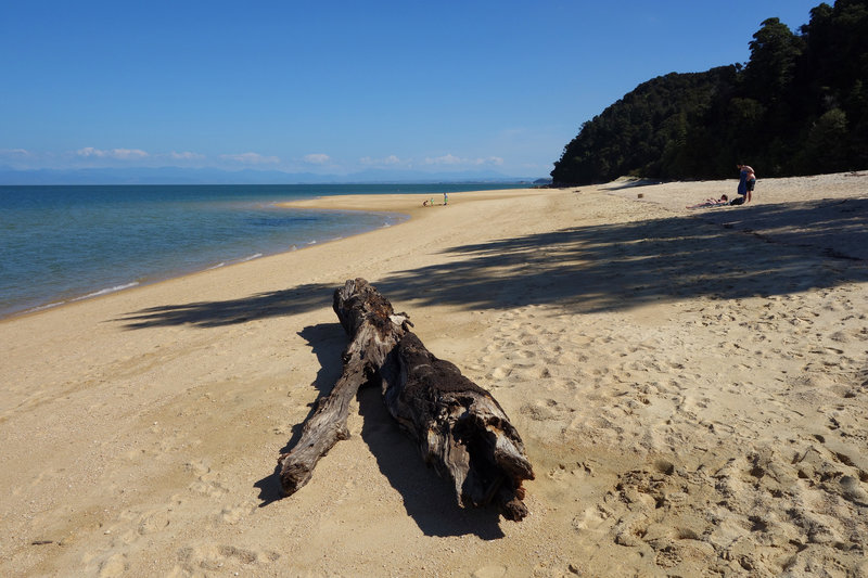 Driftwood at Apple Tree Bay