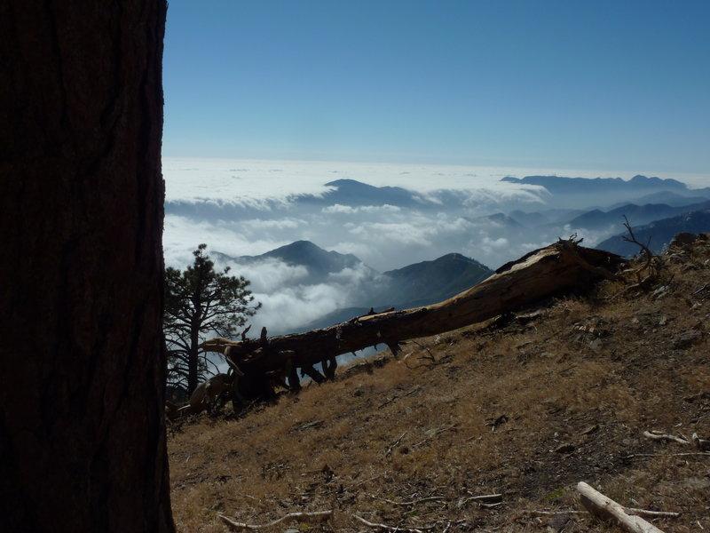 Monrovia Peak and Mt. Wilson from Hawkins Ridge