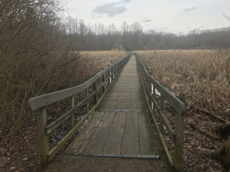 The beginning of a walkway through a wetland area