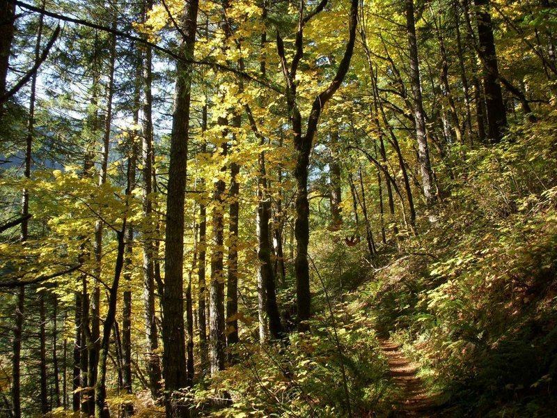 Fall colors along the Casey Creek Trail