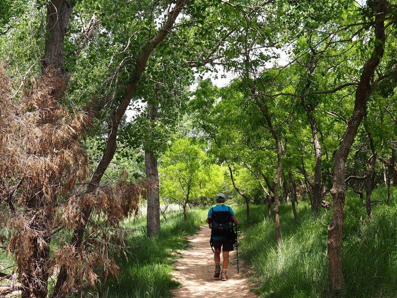 Along the Paseo del Rio Trail