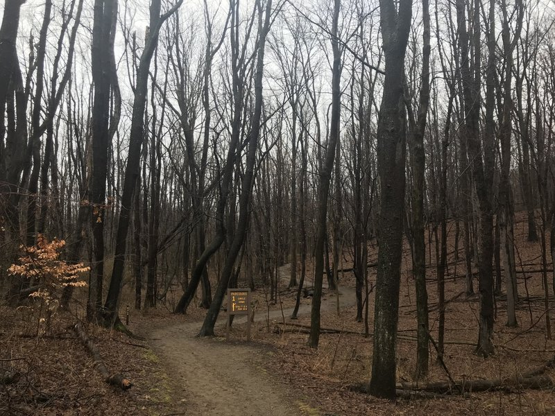 Trail winding through the park