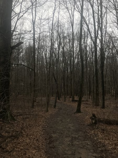 Heading into the woods