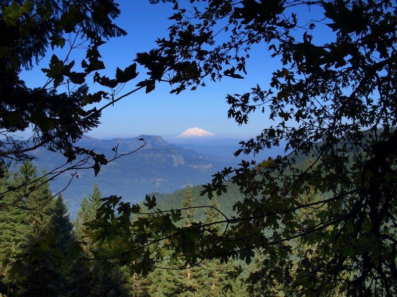 Mount Adams from the Franklin Ridge Trail