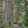 A set of trails which are surrounded on all sides by a thick forest of trees awaits day hikers at Bridle Trails.