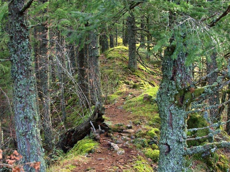 The use trail along the ridge