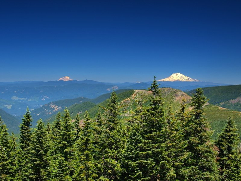Mount Rainier (L) and Mount Adams (R) from Chinidere Mountain