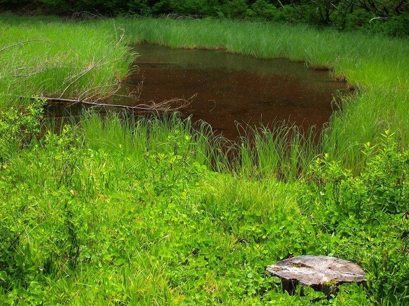 Near Thrush Pond - the trail is on cut logs