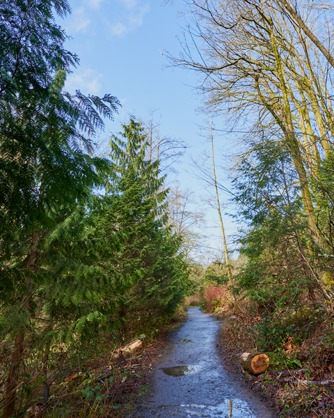 Piper's Creek has a nice, easy trail along side of it which stays clear of obstructions and debris.