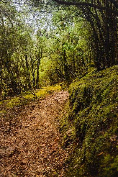 Green Descent