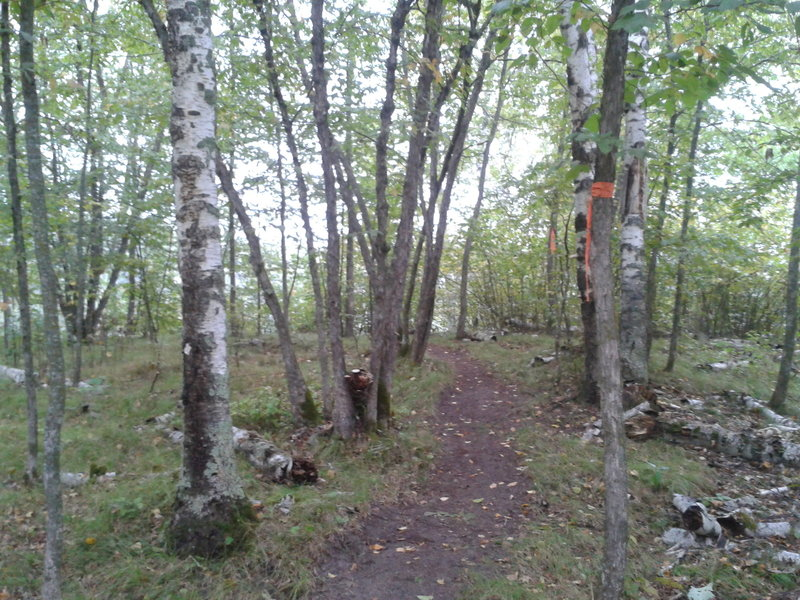 The trail passes through a grassy ironwood stand