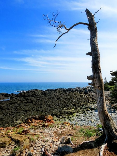 An alien like landscape in West Quoddy State Park, Lubec, Maine