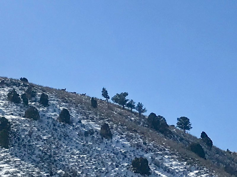 Sheep atop the hill