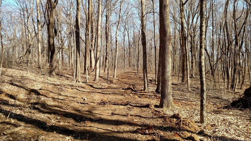 Feburary view of Mason Ridge Trail