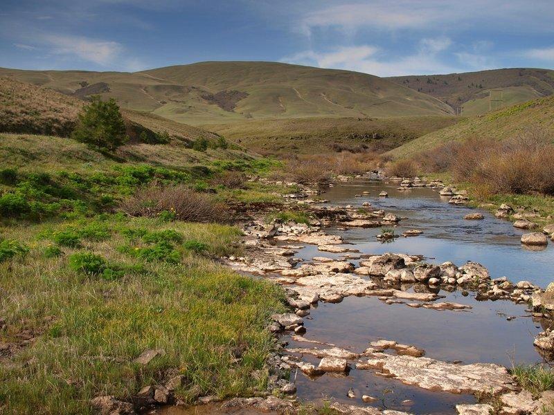 Swale Creek