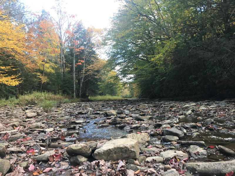 Cranberry River looking upstream