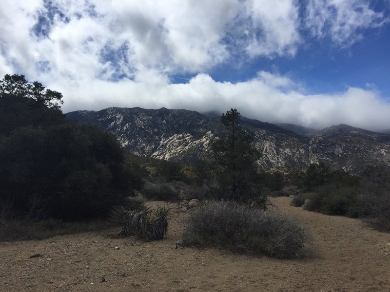 Looking south as you begin the descent to the Cactus Springs trail via the wash. Toro Peak is hidden in the clouds.