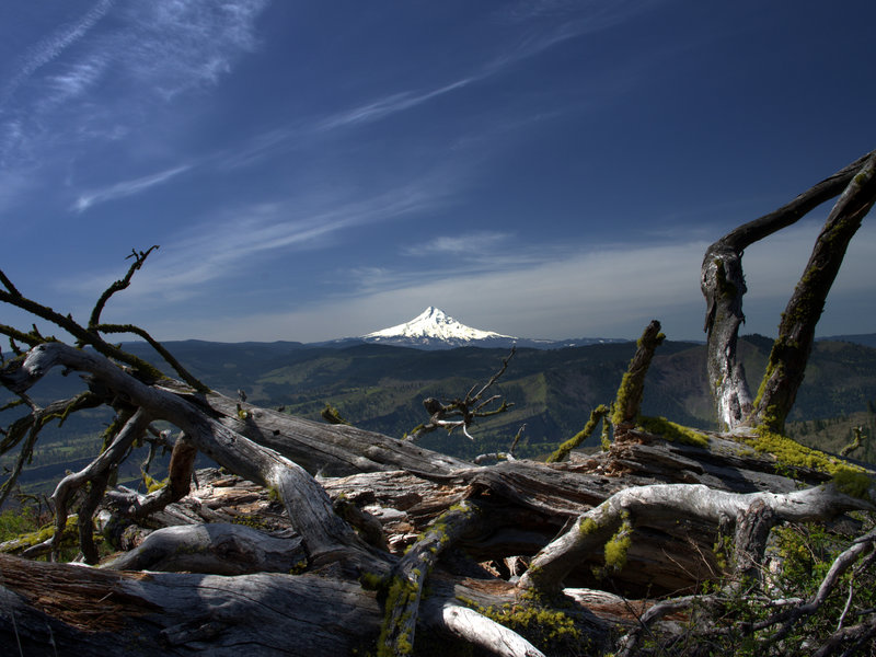 Mount Hood from the upper Catherine Creek Trail