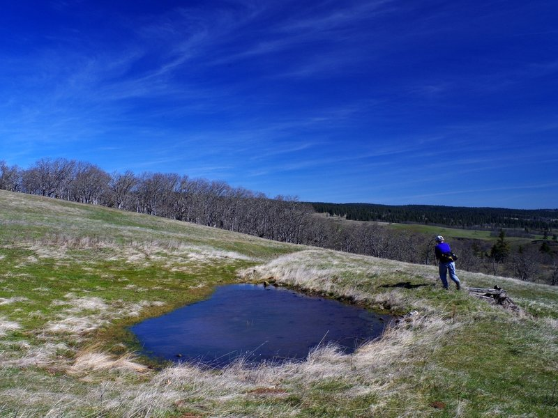 The ephemeral pond high on Tracy Hill