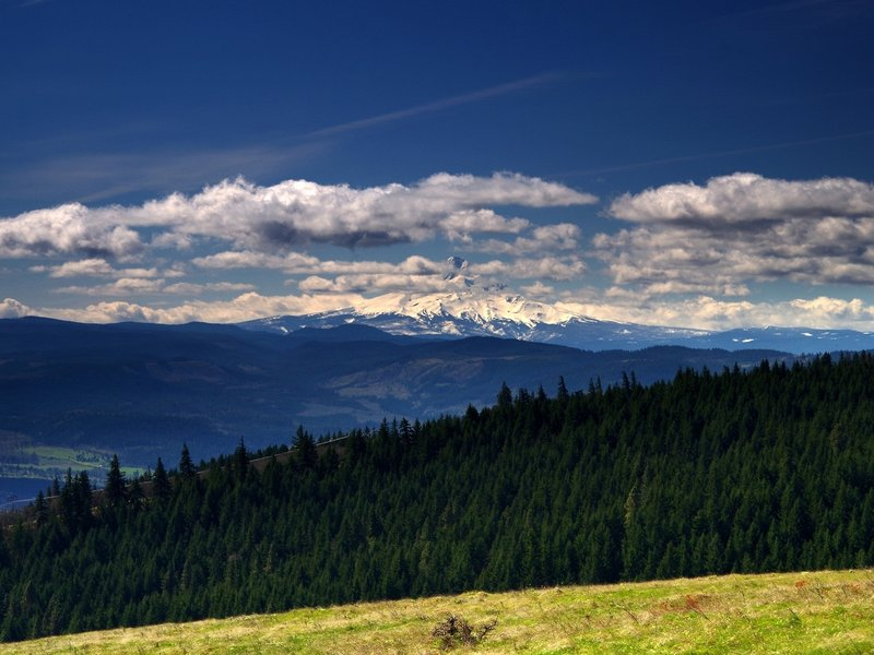 Mount Hood from Tracy Hill