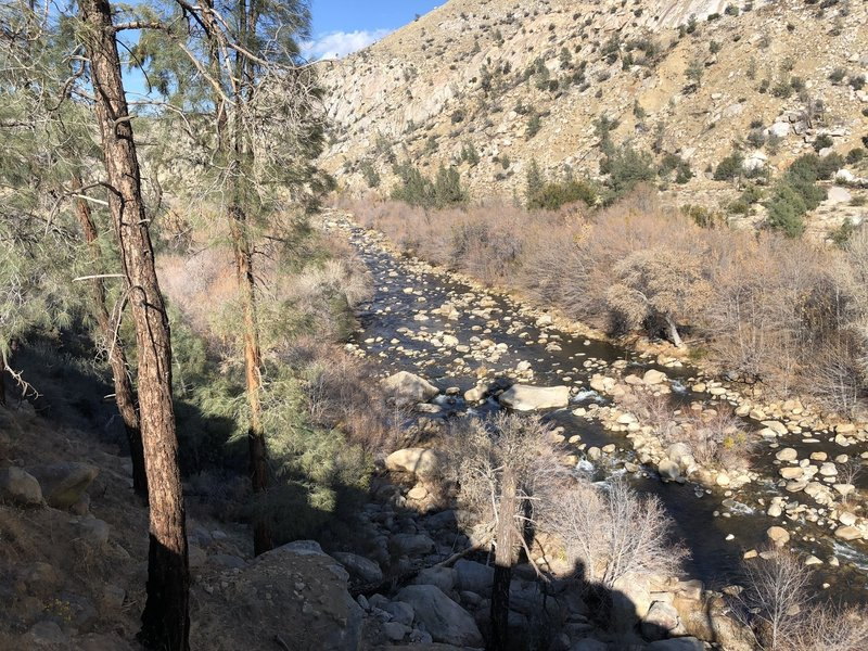 A view of the Kern River from the bank.