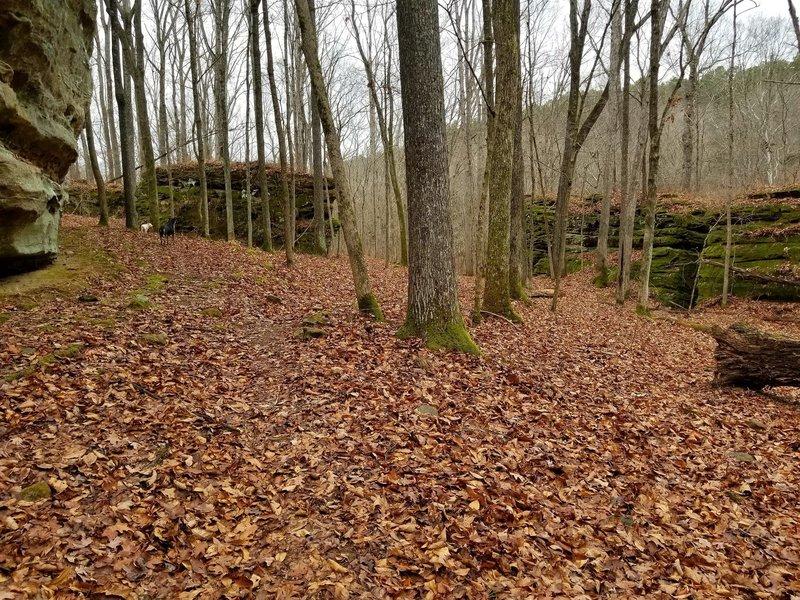 Just a walk through Lusk Wilderness
