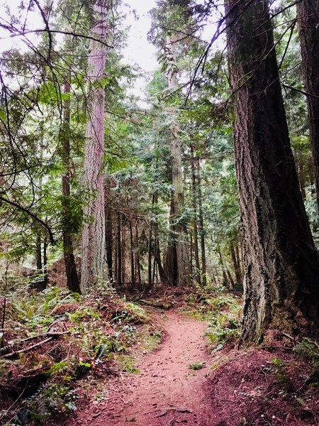 The trail winding into the forest.