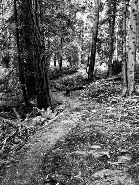 The trail twisting through the woods.