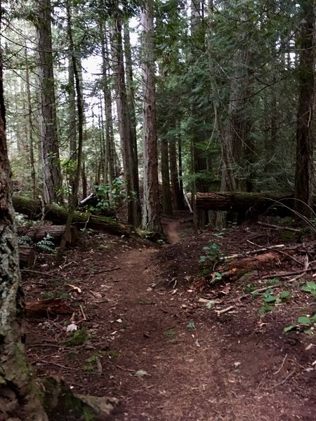 The trail meandering through the forest.