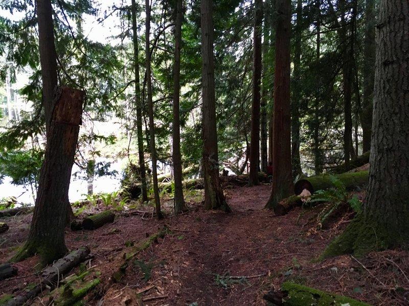Trail 125 heading towards the lake.