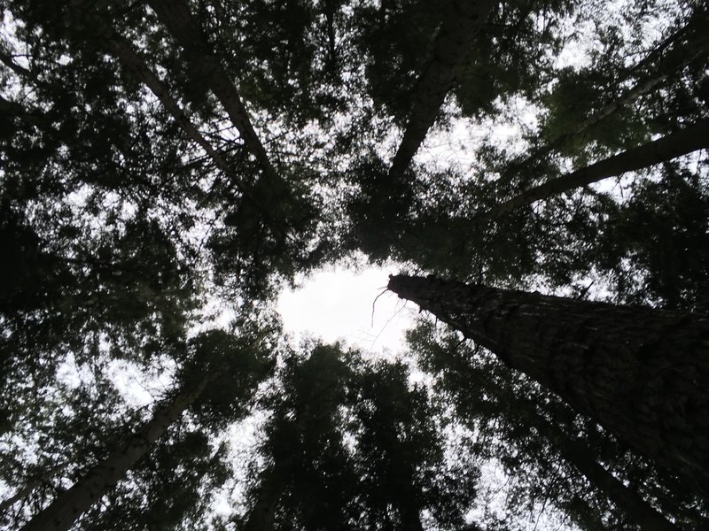 There is so much to see, sometimes I spend minutes looking up at these giants.