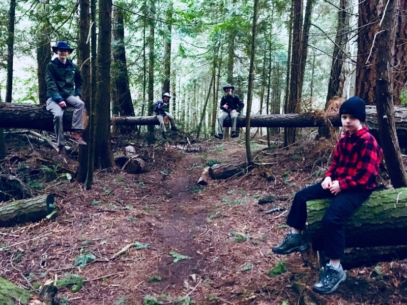 Hikers on logs!